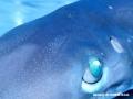requin3